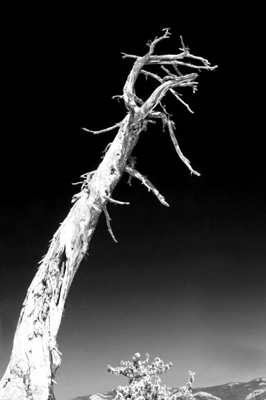 CAL_Yosemite090211-03